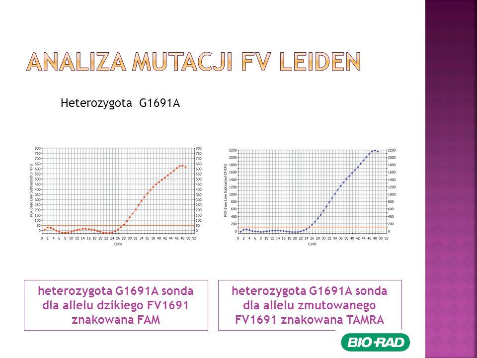 heterozygota G1691A sonda dla allelu dzikiego FV1691 znakowana FAM heterozygota G1691A sonda dla allelu zmutowanego FV1691 znakowana TAMRA Heterozygota G1691A
