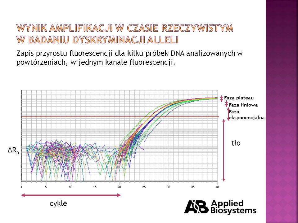 Zapis przyrostu fluorescencji dla kilku próbek DNA analizowanych w powtórzeniach, w jednym kanale fluorescencji.