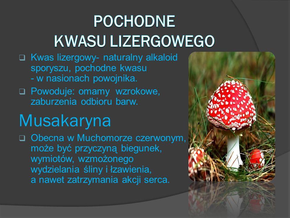 Kwas lizergowy- naturalny alkaloid sporyszu, pochodne kwasu - w nasionach powojnika. Powoduje: omamy wzrokowe, zaburzenia odbioru barw. Musakaryna Obe