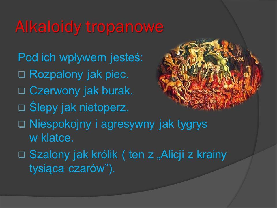 Alkaloidy tropanowe Pod ich wpływem jesteś: Rozpalony jak piec. Czerwony jak burak. Ślepy jak nietoperz. Niespokojny i agresywny jak tygrys w klatce.