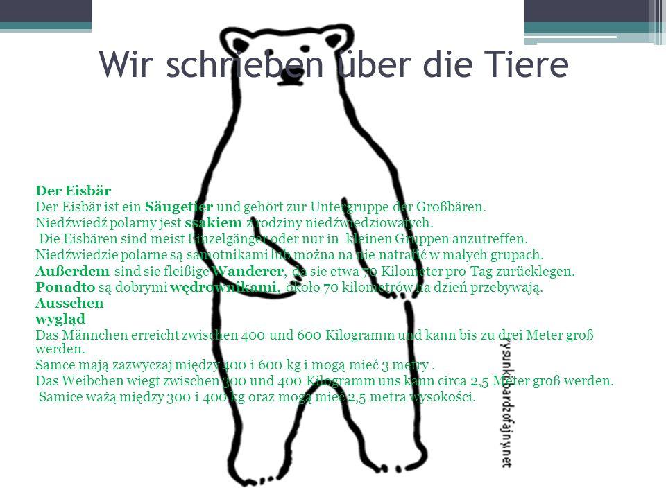 Wir schrieben über die Tiere Der Eisbär Der Eisbär ist ein Säugetier und gehört zur Untergruppe der Großbären. Niedźwiedź polarny jest ssakiem z rodzi