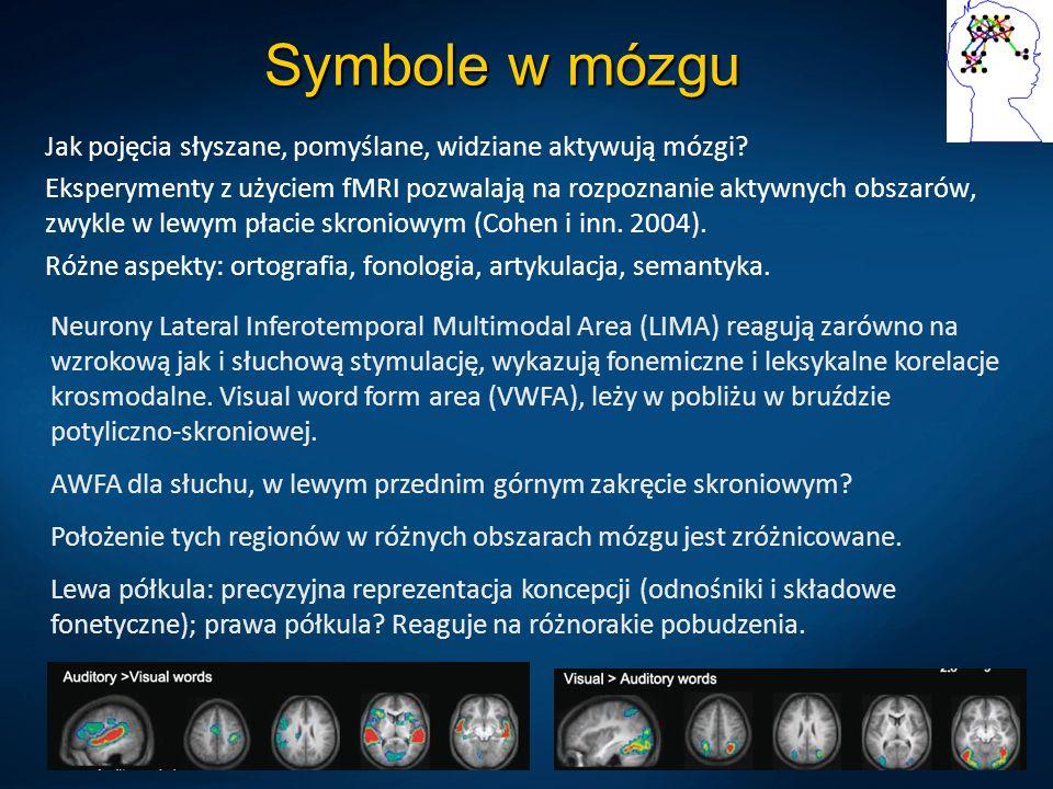 Symbole w mózgu Jak pojęcia słyszane, pomyślane, widziane aktywują mózgi? Eksperymenty z użyciem fMRI pozwalają na rozpoznanie aktywnych obszarów, zwy