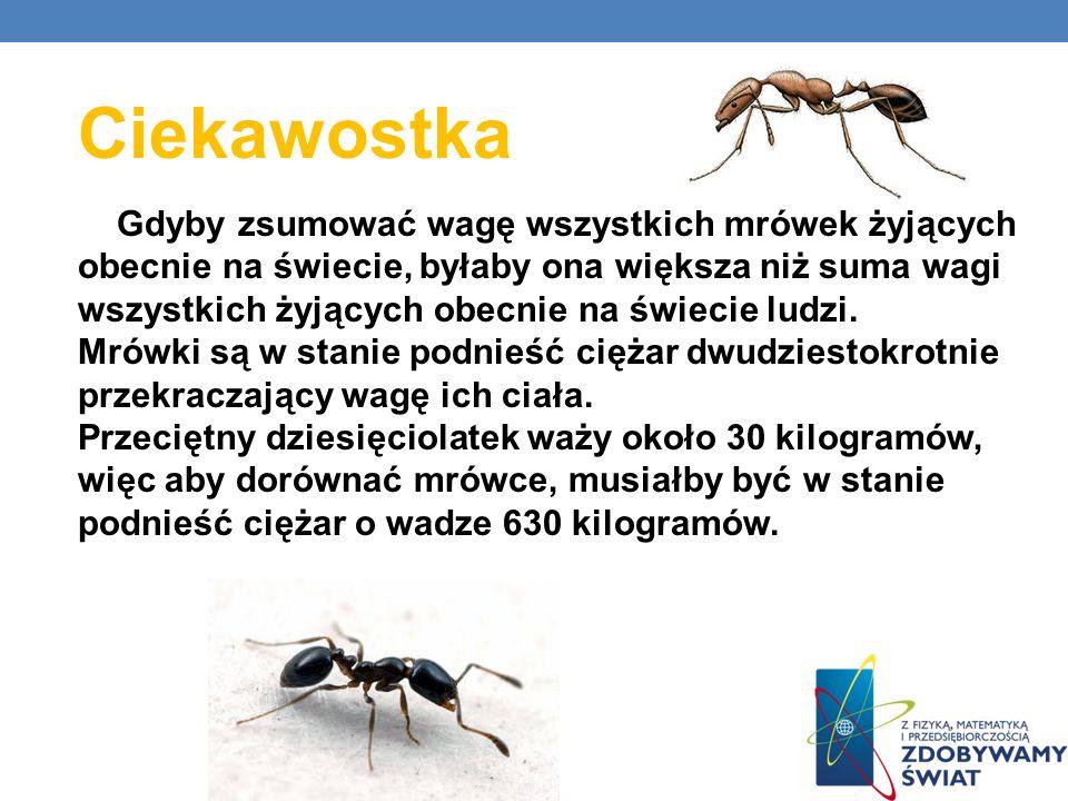 Ciekawostka Gdyby zsumować wagę wszystkich mrówek żyjących obecnie na świecie, byłaby ona większa niż suma wagi wszystkich żyjących obecnie na świecie