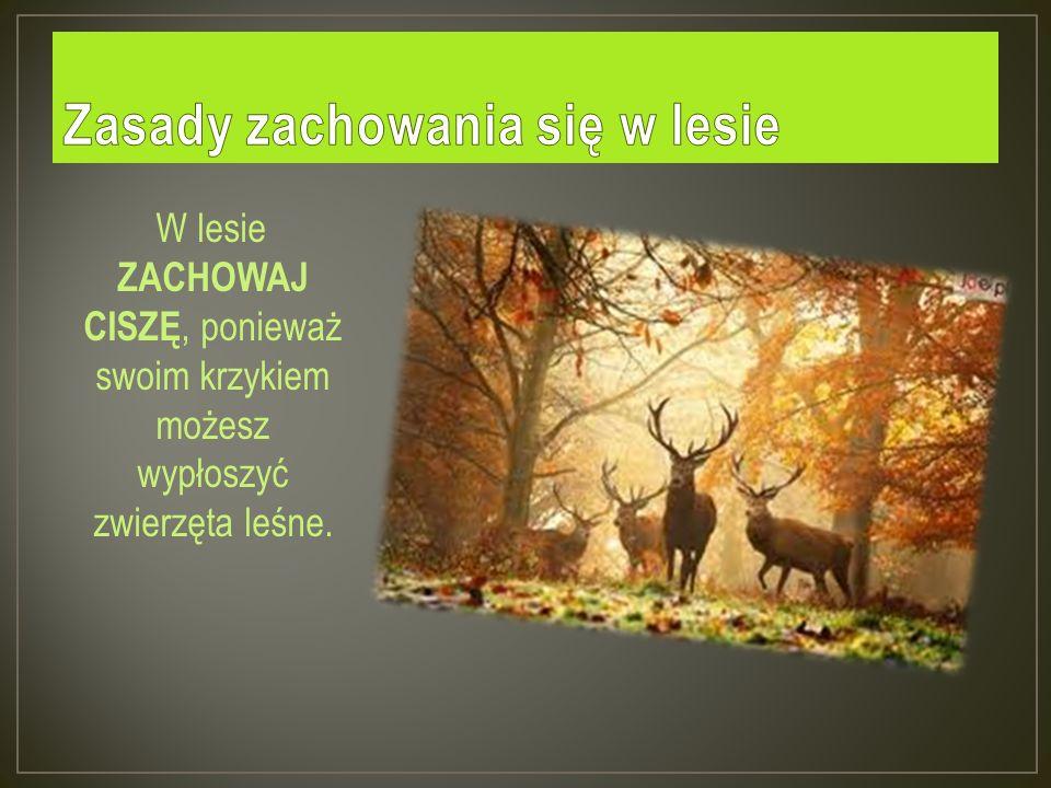 W lesie ZACHOWAJ CISZĘ, ponieważ swoim krzykiem możesz wypłoszyć zwierzęta leśne.