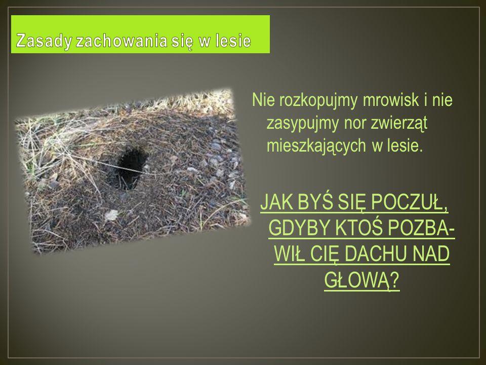 Nie rozkopujmy mrowisk i nie zasypujmy nor zwierząt mieszkających w lesie.