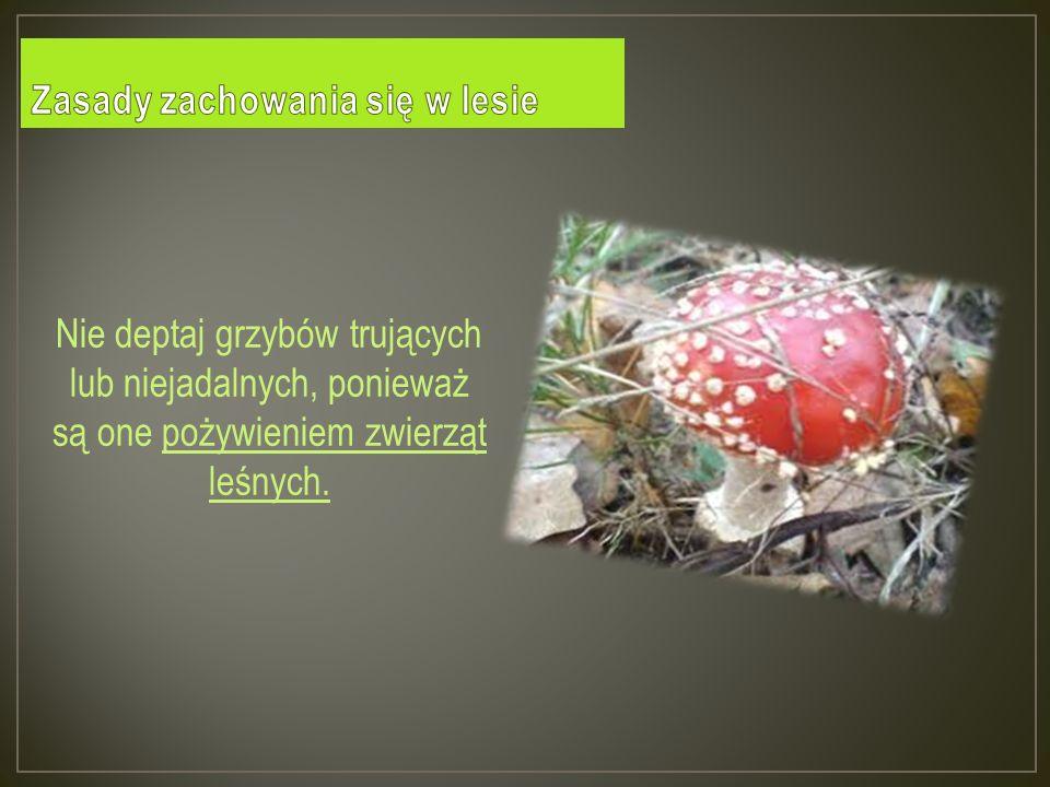 Nie deptaj grzybów trujących lub niejadalnych, ponieważ są one pożywieniem zwierząt leśnych.