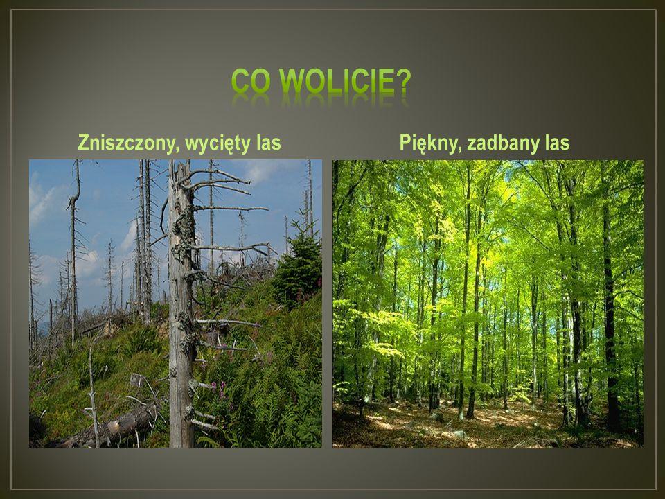 Zniszczony, wycięty lasPiękny, zadbany las