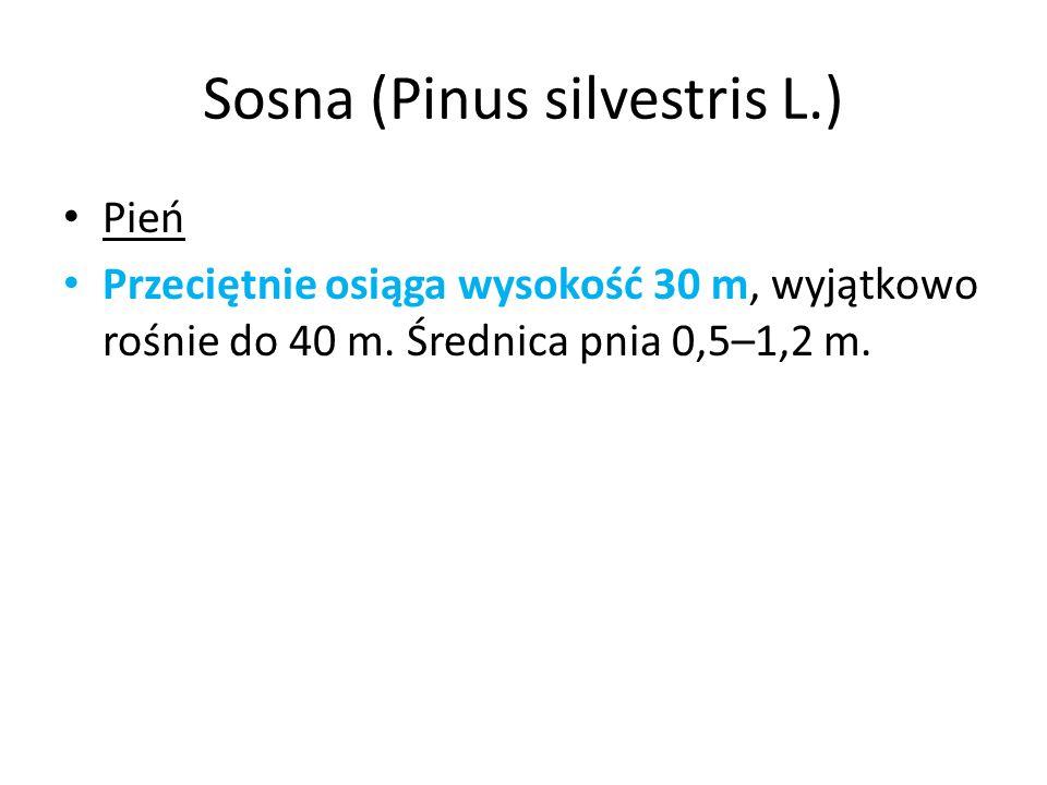Sosna (Pinus silvestris L.) Pień Przeciętnie osiąga wysokość 30 m, wyjątkowo rośnie do 40 m. Średnica pnia 0,5–1,2 m.