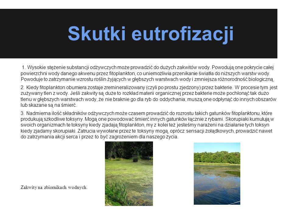 Skutki eutrofizacji 1. Wysokie stężenie substancji odżywczych może prowadzić do dużych zakwitów wody. Powodują one pokrycie całej powierzchni wody dan