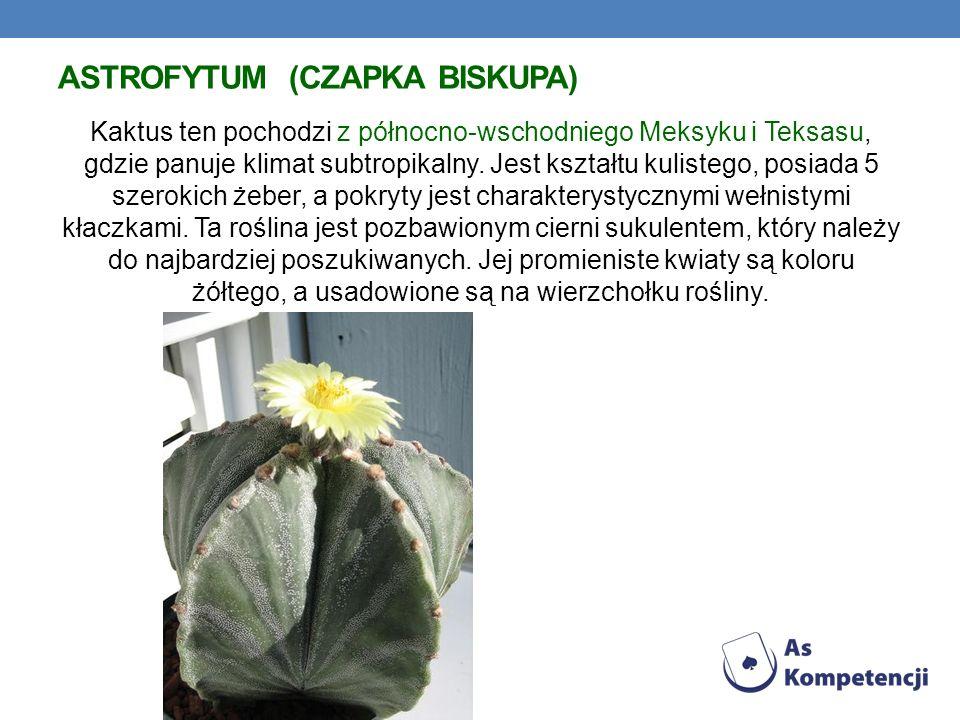 ASTROFYTUM (CZAPKA BISKUPA) Kaktus ten pochodzi z północno-wschodniego Meksyku i Teksasu, gdzie panuje klimat subtropikalny. Jest kształtu kulistego,