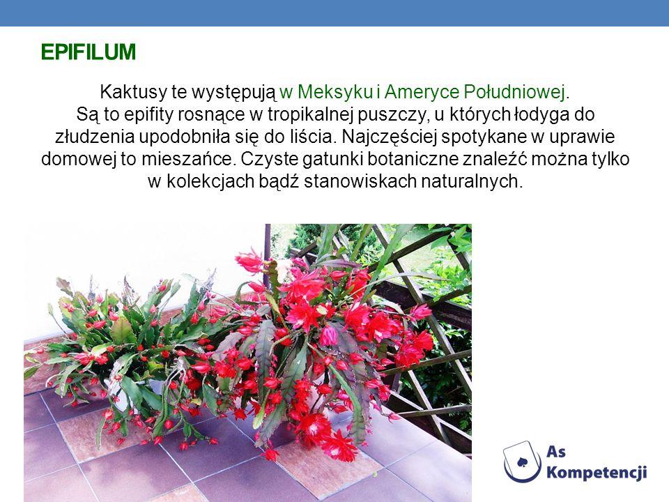 EPIFILUM Kaktusy te występują w Meksyku i Ameryce Południowej.