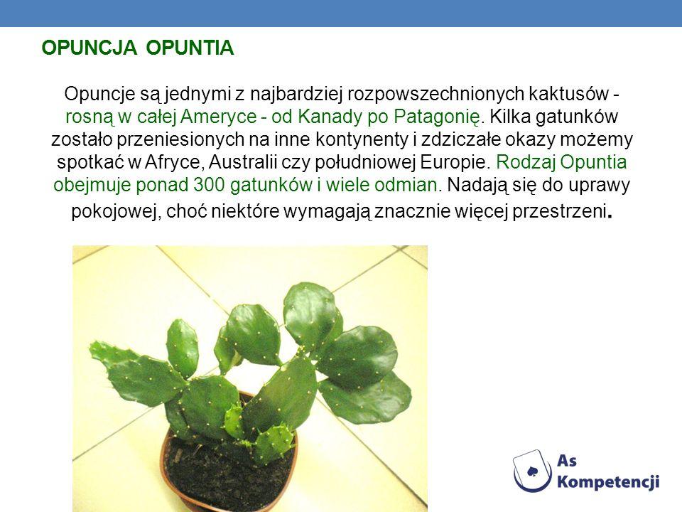 OPUNCJA OPUNTIA Opuncje są jednymi z najbardziej rozpowszechnionych kaktusów - rosną w całej Ameryce - od Kanady po Patagonię. Kilka gatunków zostało