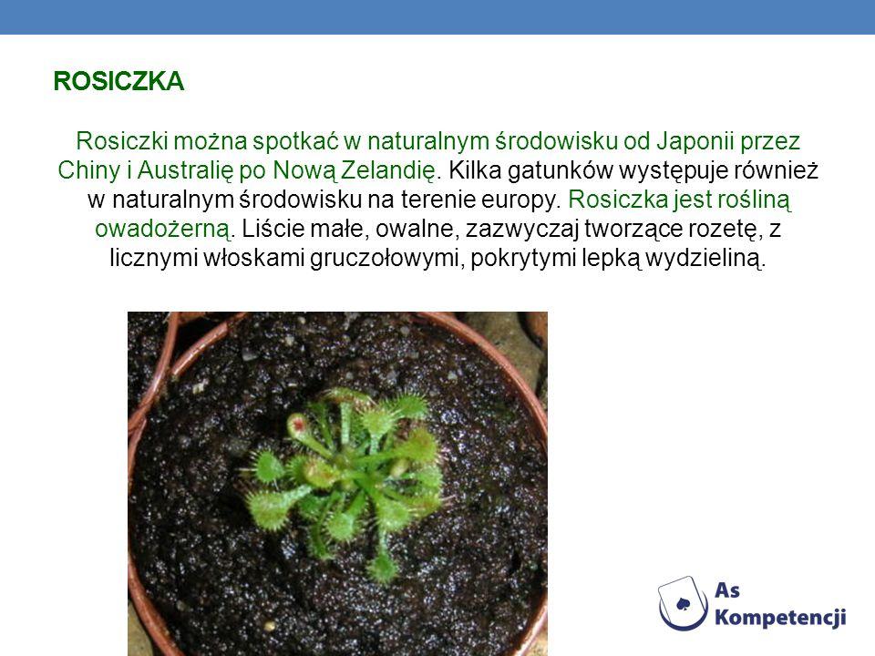 ROSICZKA Rosiczki można spotkać w naturalnym środowisku od Japonii przez Chiny i Australię po Nową Zelandię. Kilka gatunków występuje również w natura