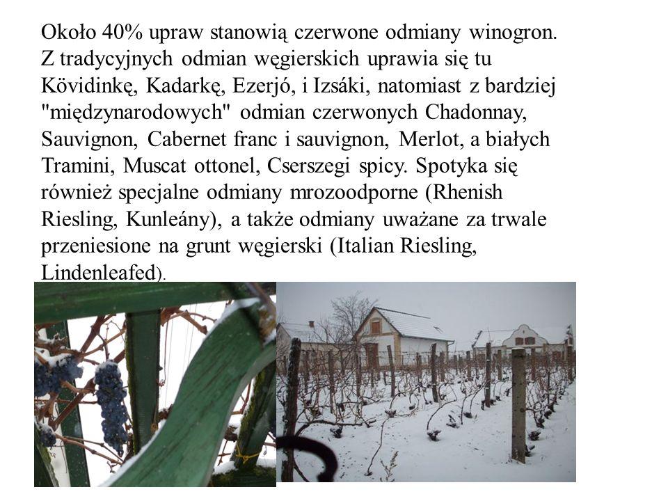 Około 40% upraw stanowią czerwone odmiany winogron.