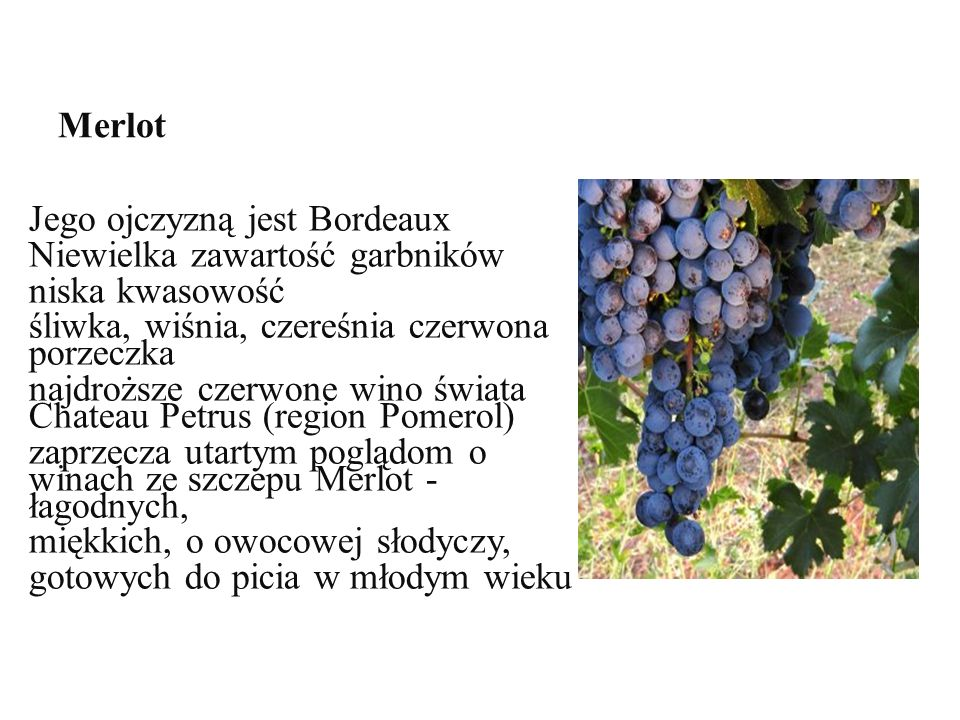 Merlot Jego ojczyzną jest Bordeaux Niewielka zawartość garbników niska kwasowość Jego ojczyzną jest Bordeaux Niewielka zawartość garbników niska kwasowość śliwka, wiśnia, czereśnia czerwona porzeczka najdroższe czerwone wino świata Chateau Petrus (region Pomerol) zaprzecza utartym poglądom o winach ze szczepu Merlot - łagodnych, miękkich, o owocowej słodyczy, gotowych do picia w młodym wieku
