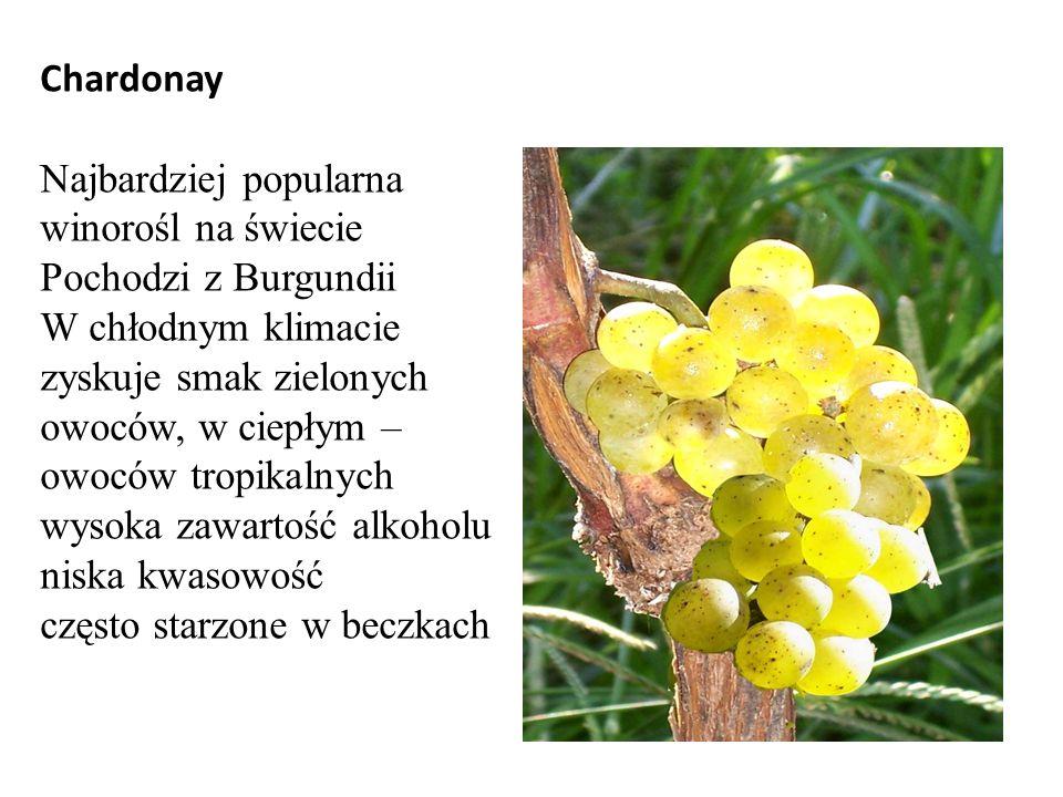 Chardonay Najbardziej popularna winorośl na świecie Pochodzi z Burgundii W chłodnym klimacie zyskuje smak zielonych owoców, w ciepłym – owoców tropikalnych wysoka zawartość alkoholu niska kwasowość często starzone w beczkach