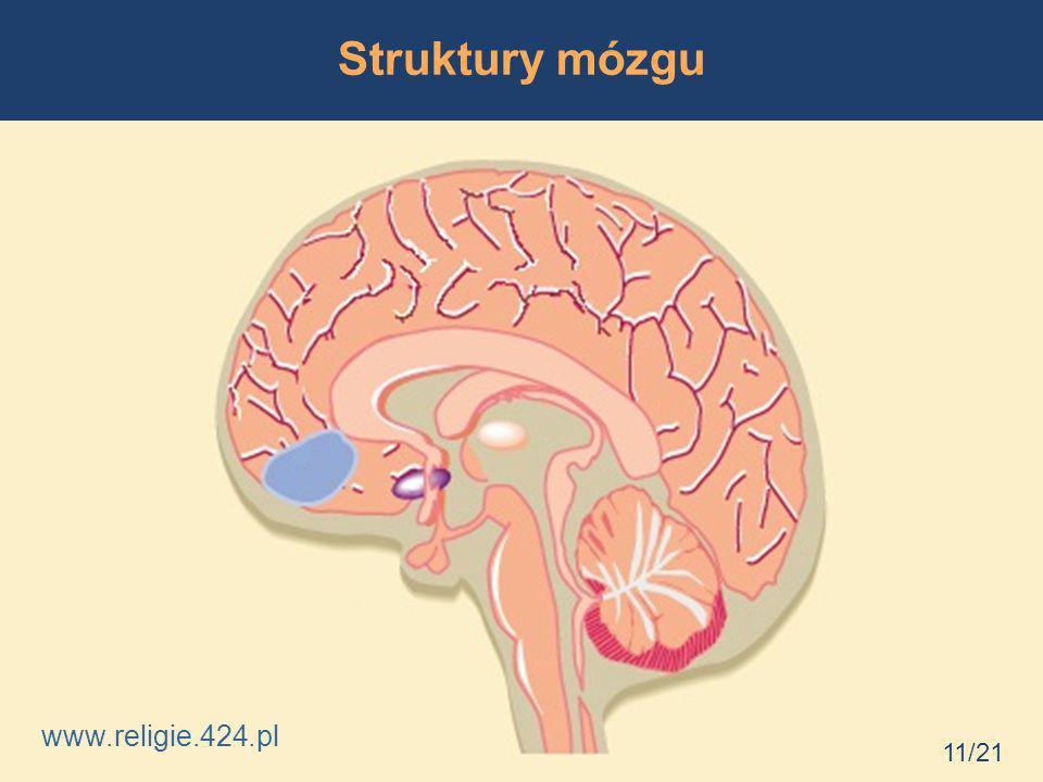 Struktury mózgu 11/21 www.religie.424.pl