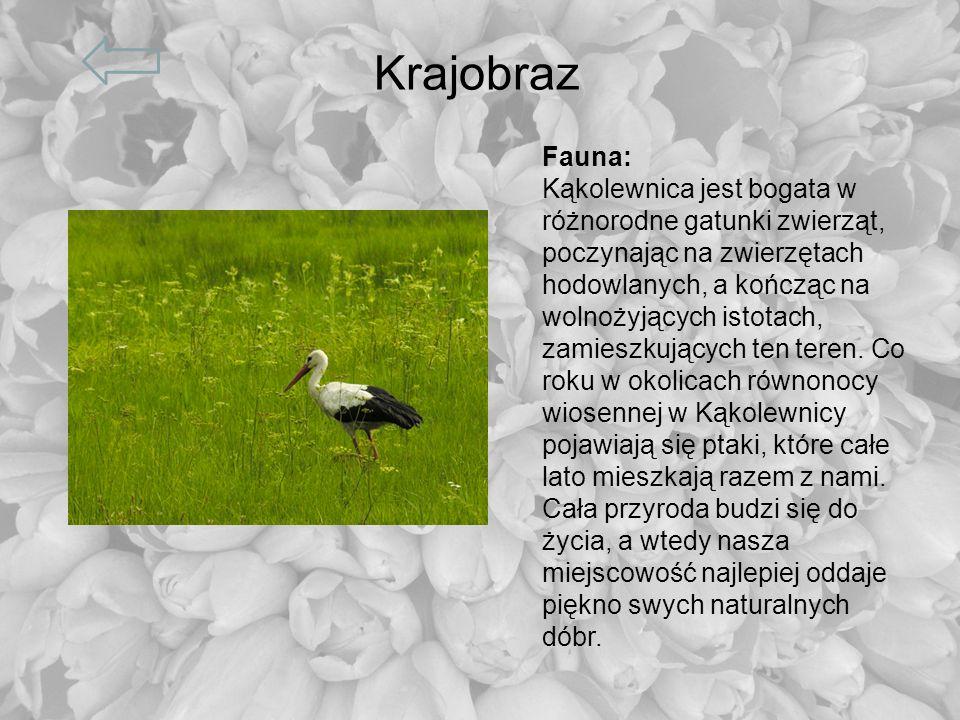 Krajobraz Fauna: Kąkolewnica jest bogata w różnorodne gatunki zwierząt, poczynając na zwierzętach hodowlanych, a kończąc na wolnożyjących istotach, za