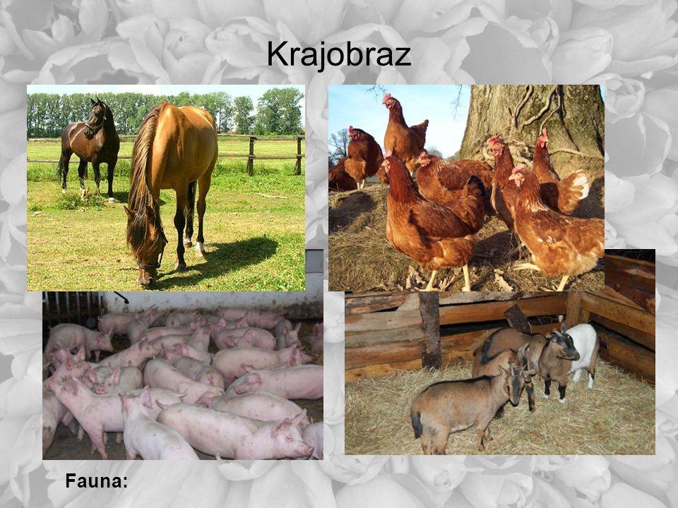 Krajobraz Fauna: