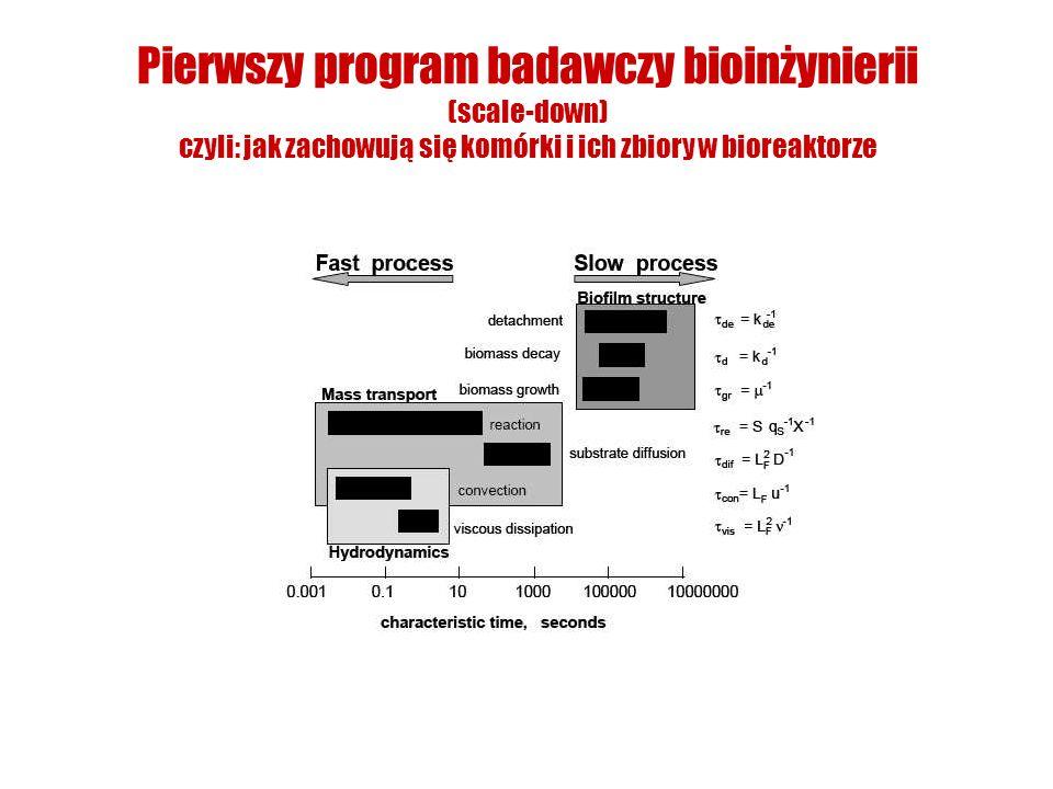 Pierwszy program badawczy bioinżynierii (scale-down) czyli: jak zachowują się komórki i ich zbiory w bioreaktorze