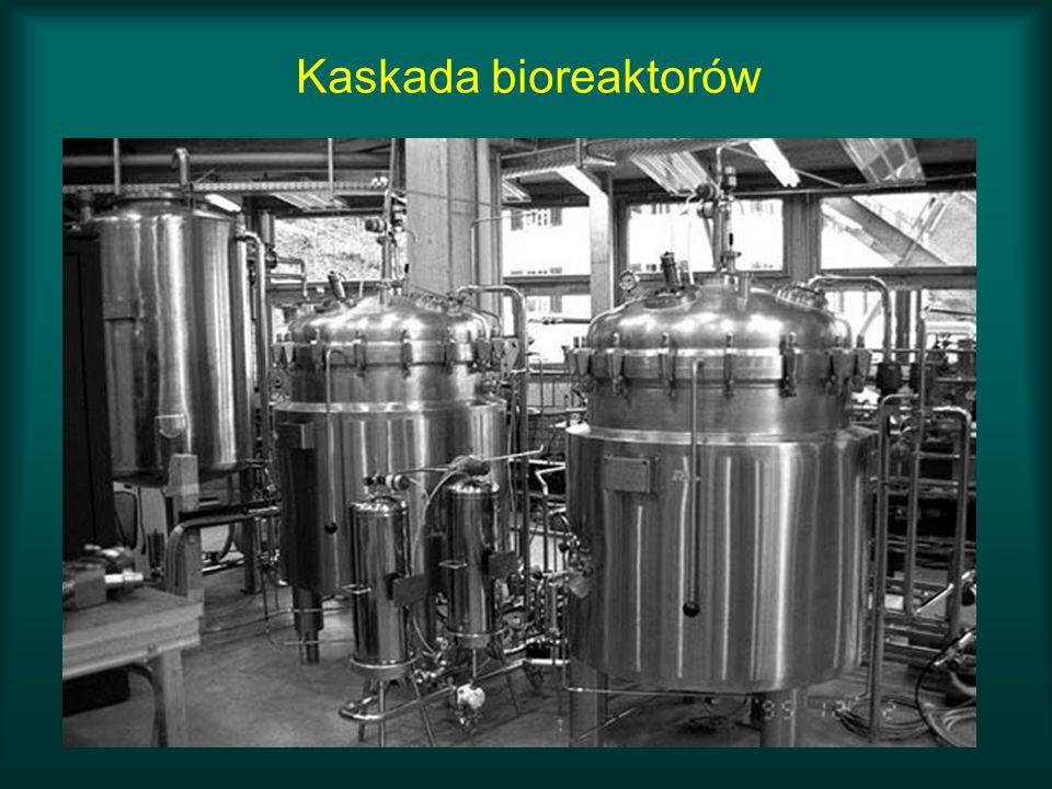 Kaskada bioreaktorów