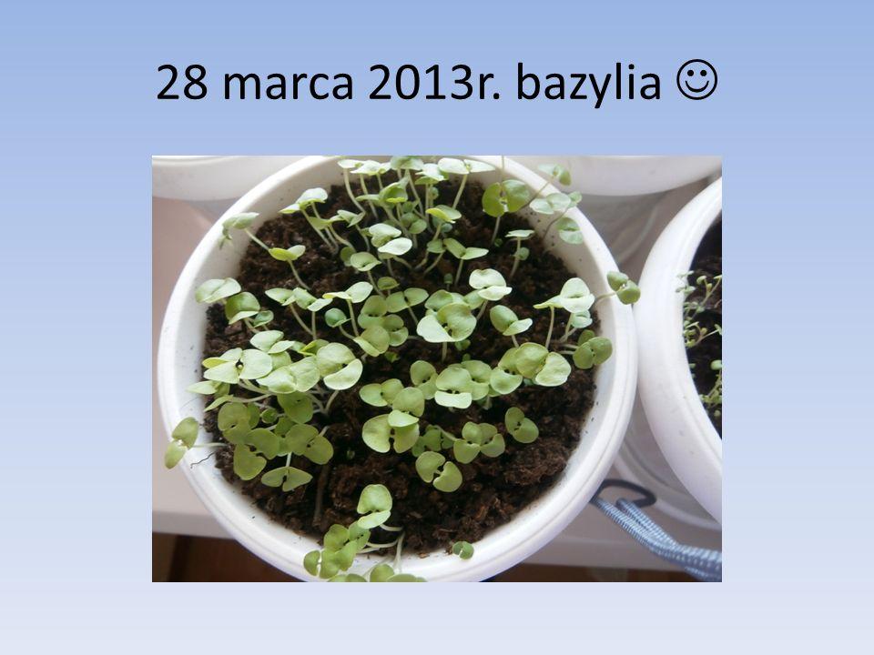 28 marca 2013r. bazylia