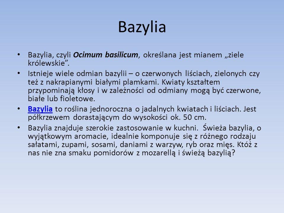 Bazylia, czyli Ocimum basilicum, określana jest mianem ziele królewskie.
