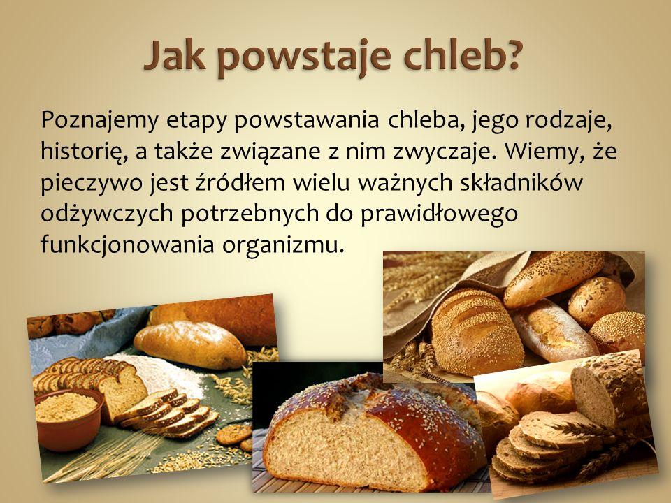 Poznajemy etapy powstawania chleba, jego rodzaje, historię, a także związane z nim zwyczaje. Wiemy, że pieczywo jest źródłem wielu ważnych składników
