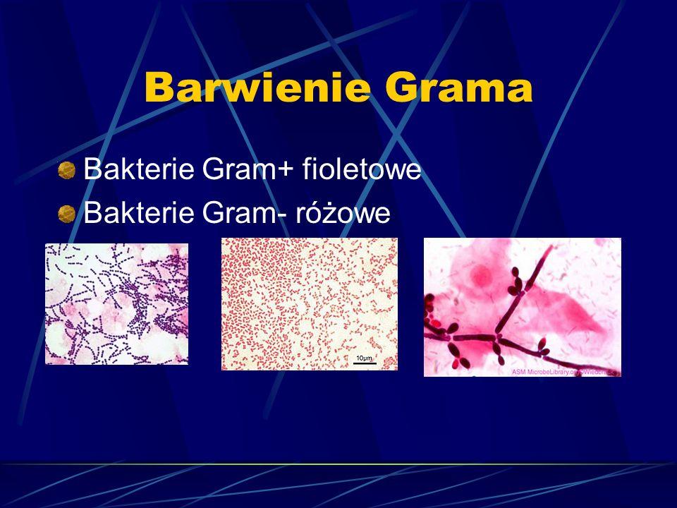 Barwienie Grama Bakterie Gram+ fioletowe Bakterie Gram- różowe