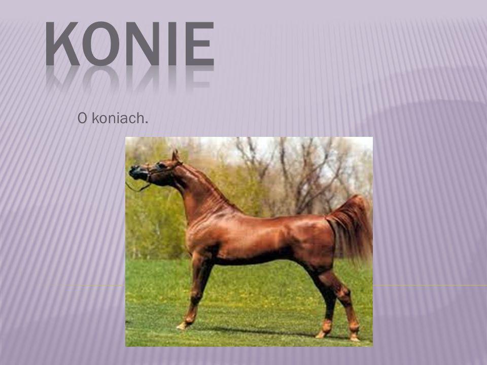 O koniach.