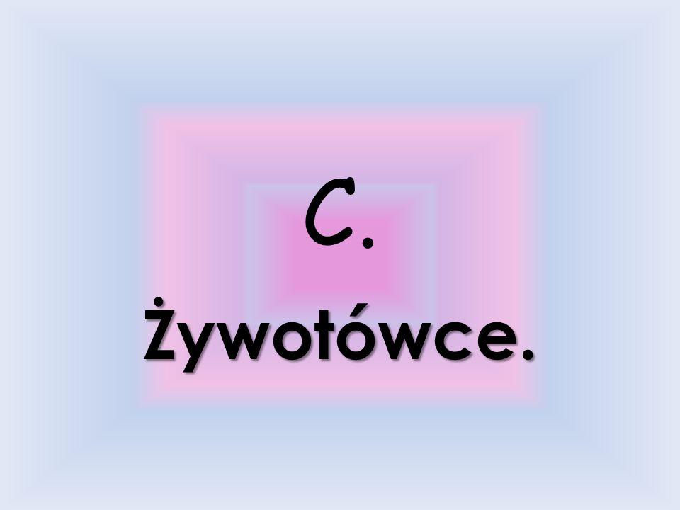 8. Opryszkowie mieszkali w … a.Bejgole. b.Głodowcach. c.Żywotówce. d.Wiliszkach.