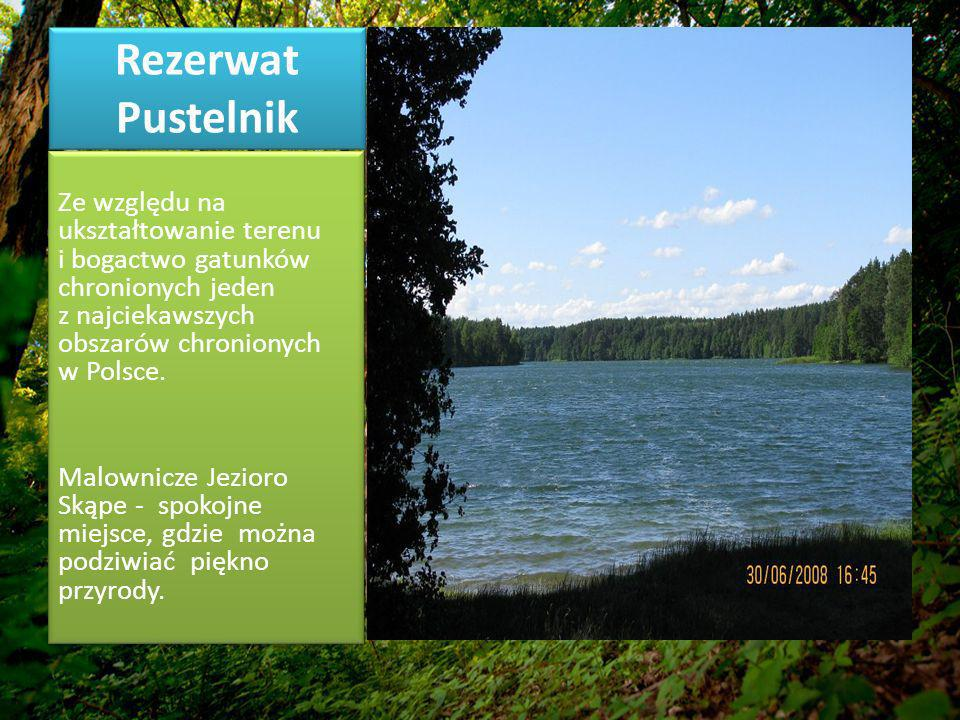 Rezerwat Pustelnik Ze względu na ukształtowanie terenu i bogactwo gatunków chronionych jeden z najciekawszych obszarów chronionych w Polsce.