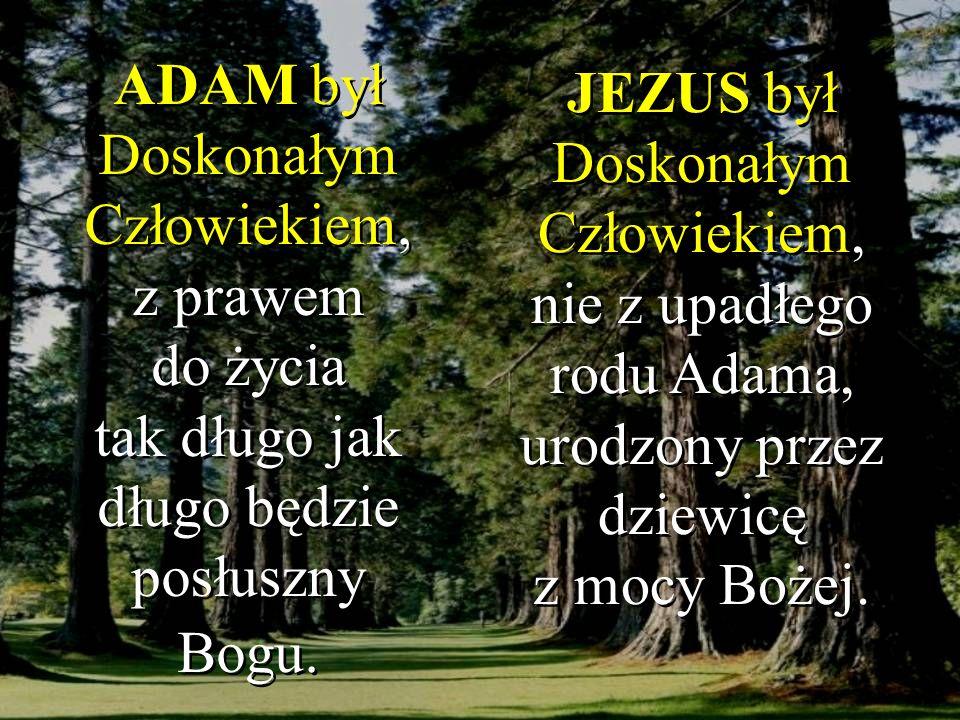 ADAM był Doskonałym Człowiekiem, z prawem do życia tak długo jak długo będzie posłuszny Bogu. JEZUS był Doskonałym Człowiekiem, nie z upadłego rodu Ad