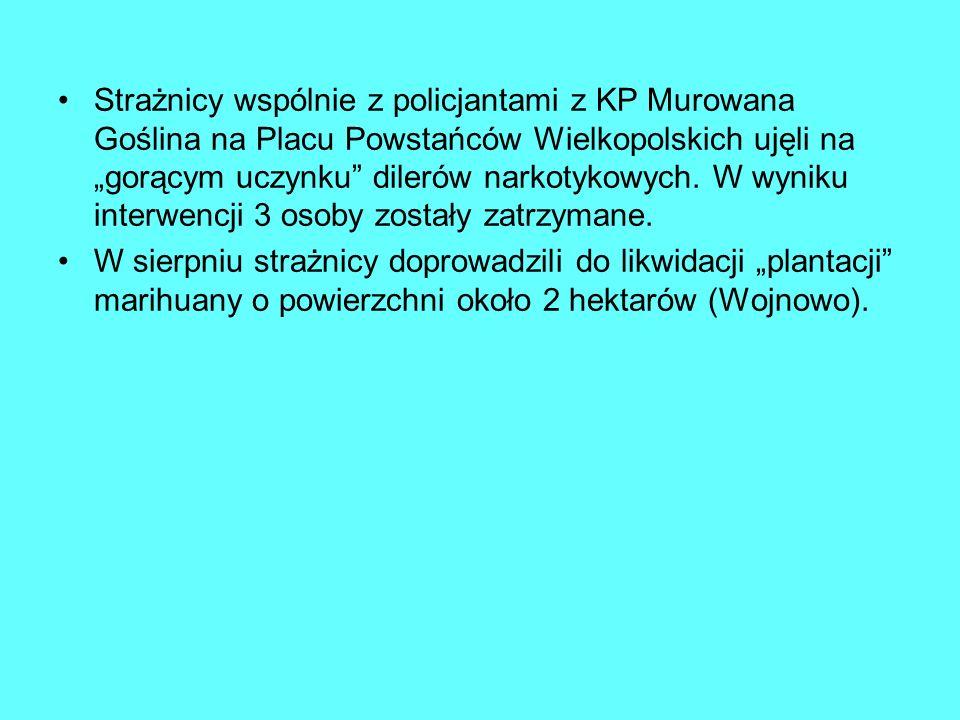 Strażnicy wspólnie z policjantami z KP Murowana Goślina na Placu Powstańców Wielkopolskich ujęli na gorącym uczynku dilerów narkotykowych.