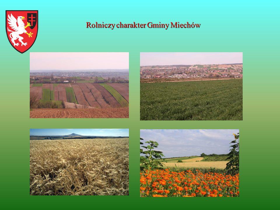 Rolniczy charakter Gminy Miechów