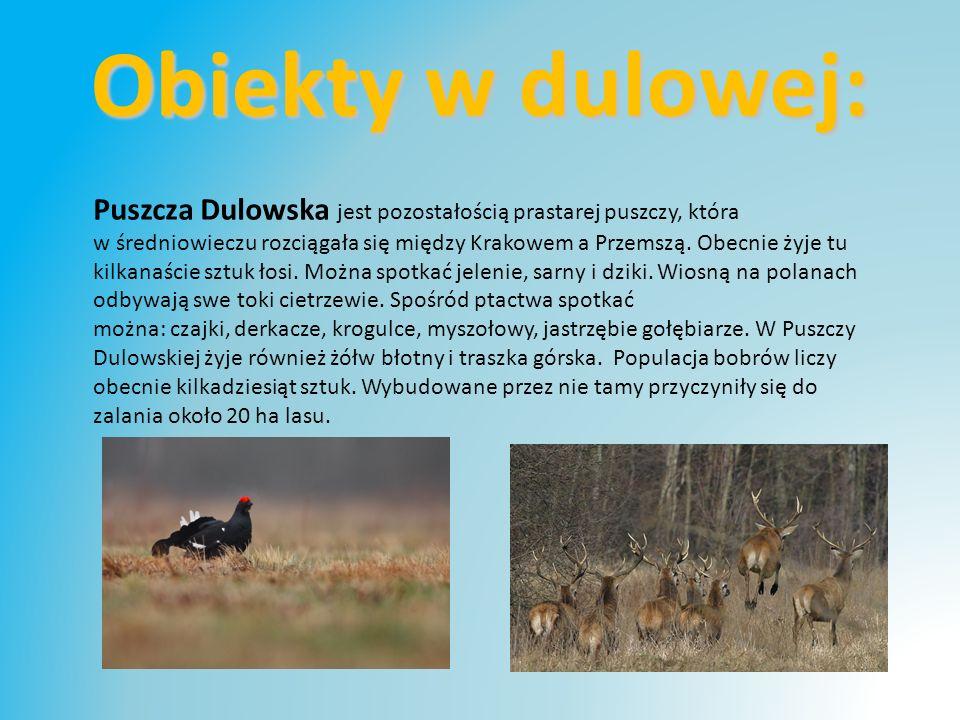 Puszcza Dulowska jest pozostałością prastarej puszczy, która w średniowieczu rozciągała się między Krakowem a Przemszą.