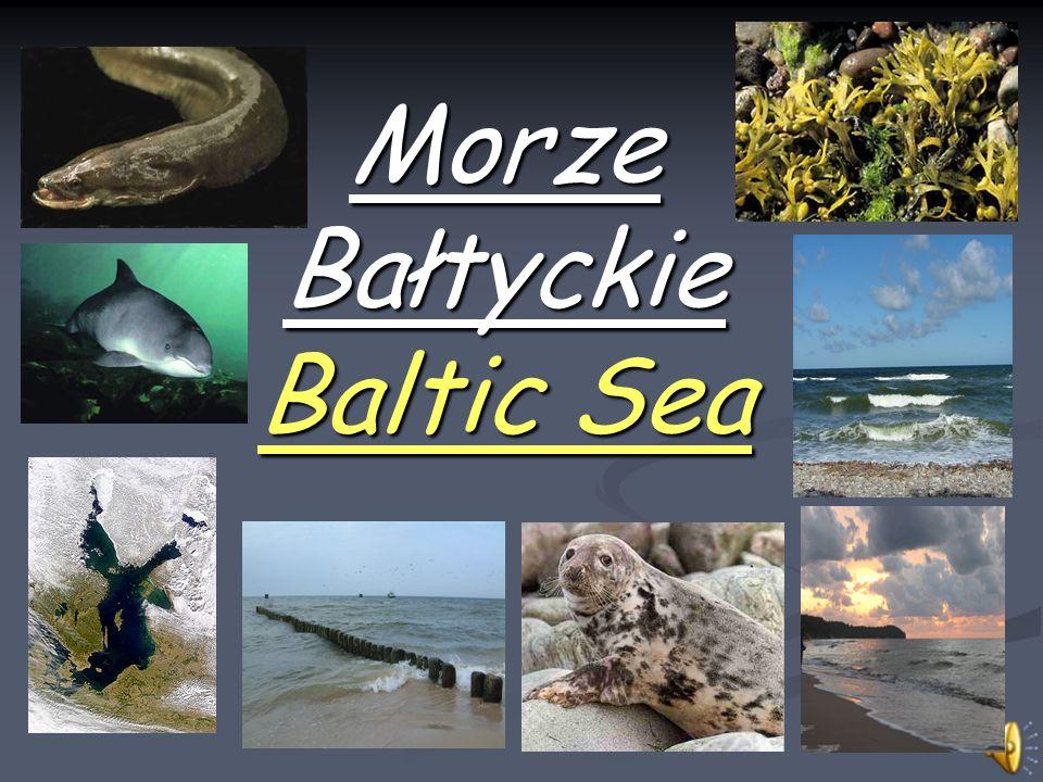 Zasolenie Ze względu na niskie zasolenie Bałtyk zalicza się do wód słonawych i określa morzem półsłonym.