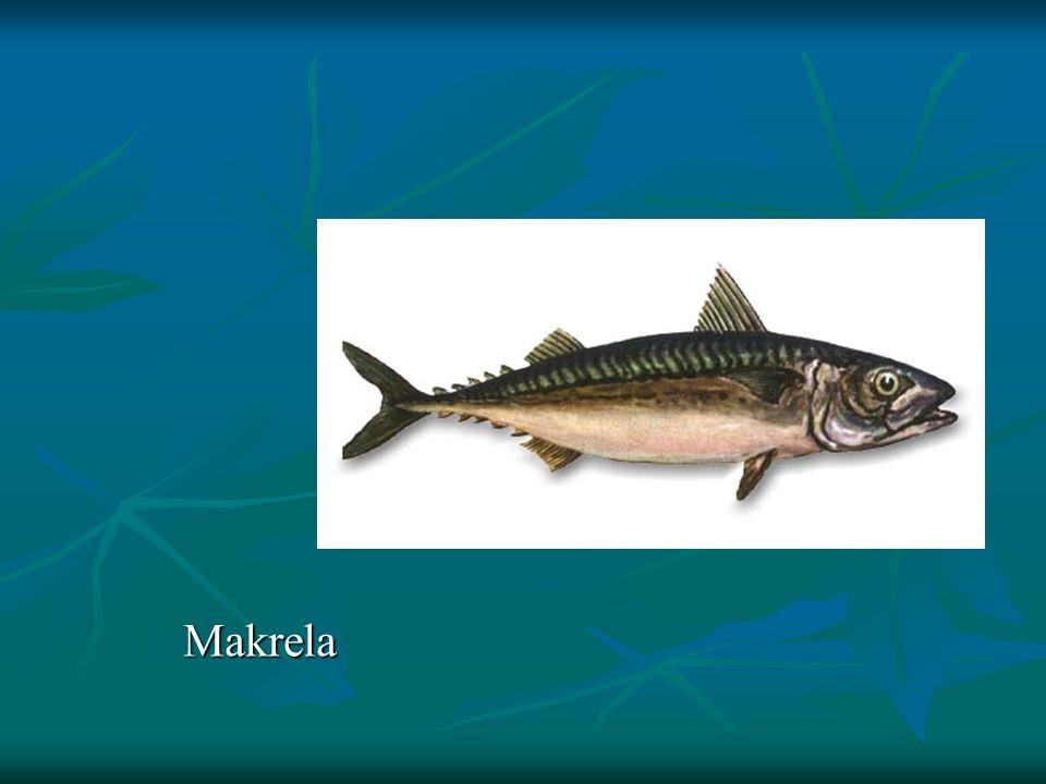 Makrela Makrela