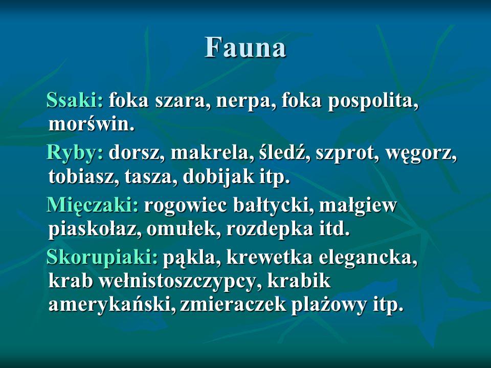 Fauna Ssaki: foka szara, nerpa, foka pospolita, morświn. Ssaki: foka szara, nerpa, foka pospolita, morświn. Ryby: dorsz, makrela, śledź, szprot, węgor