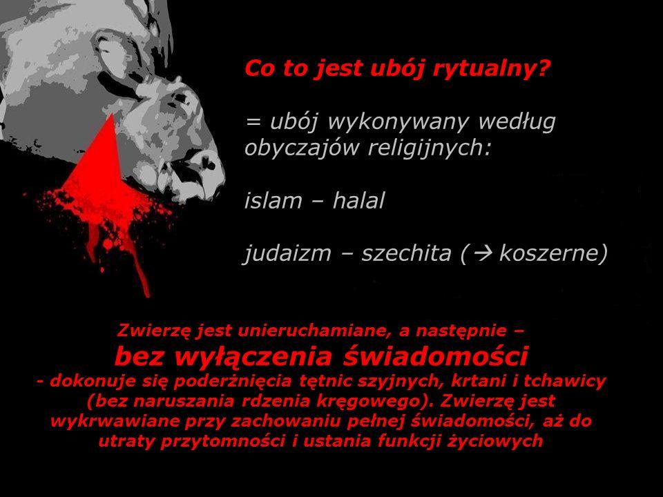 Co to jest ubój rytualny? = ubój wykonywany według obyczajów religijnych: islam – halal judaizm – szechita ( koszerne) Zwierzę jest unieruchamiane, a