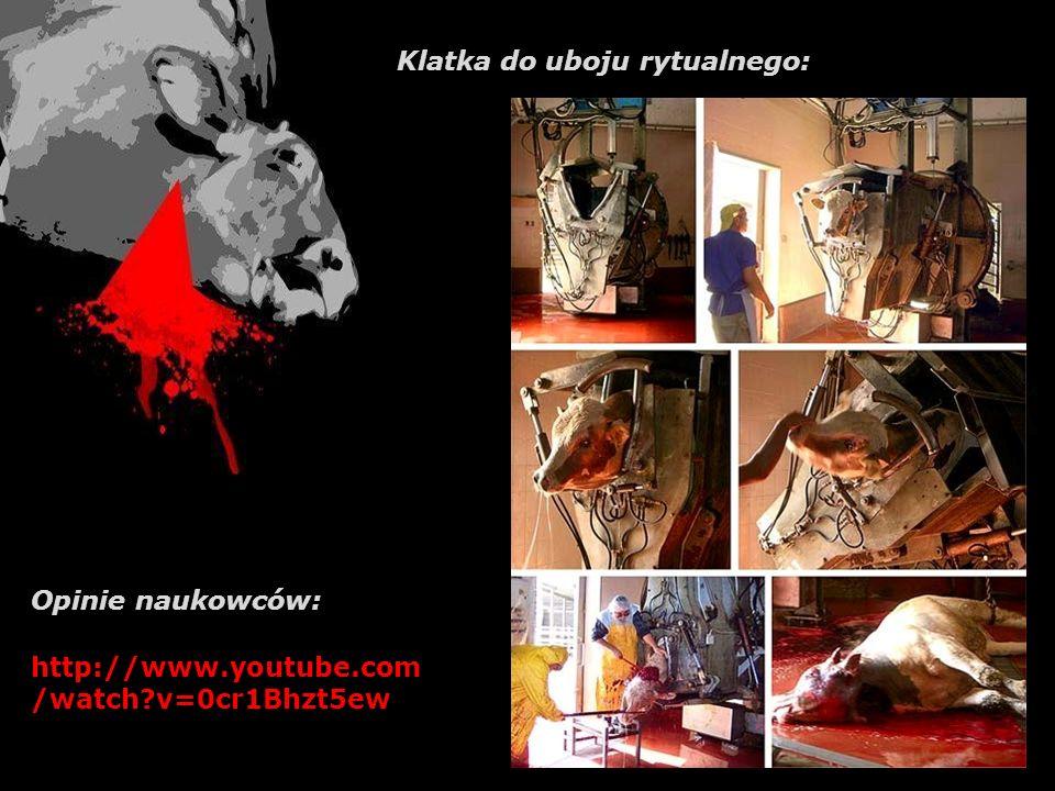 Legalizacja uboju rytualnego cofnęłaby Polskę o całą dekadę w dziedzinie humanitarnego traktowania zwierząt!