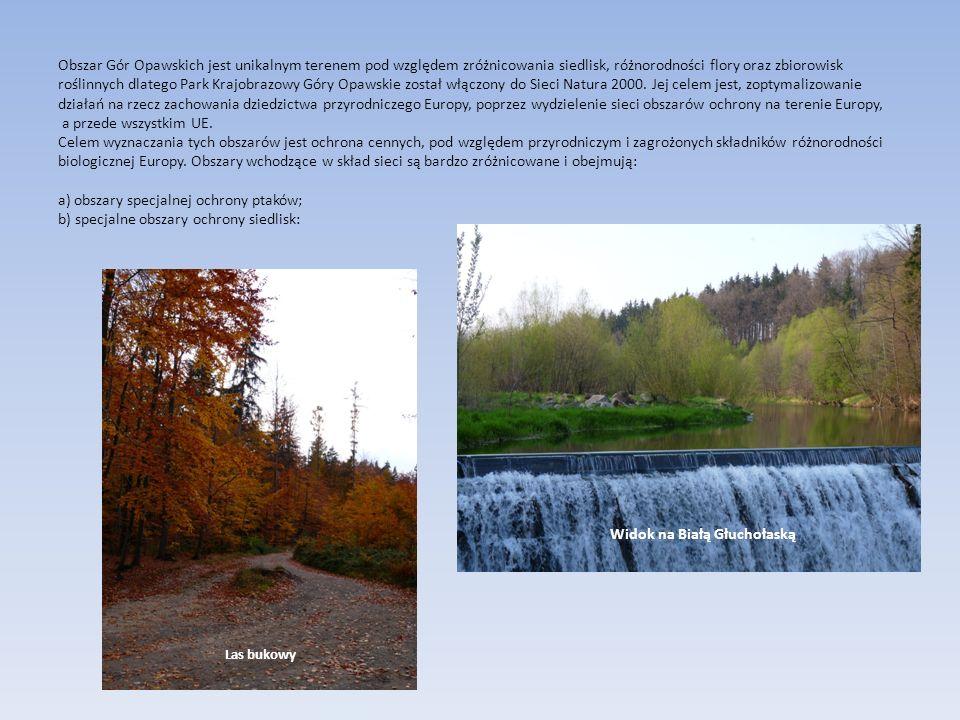 Obszar Gór Opawskich jest unikalnym terenem pod względem zróżnicowania siedlisk, różnorodności flory oraz zbiorowisk roślinnych dlatego Park Krajobraz