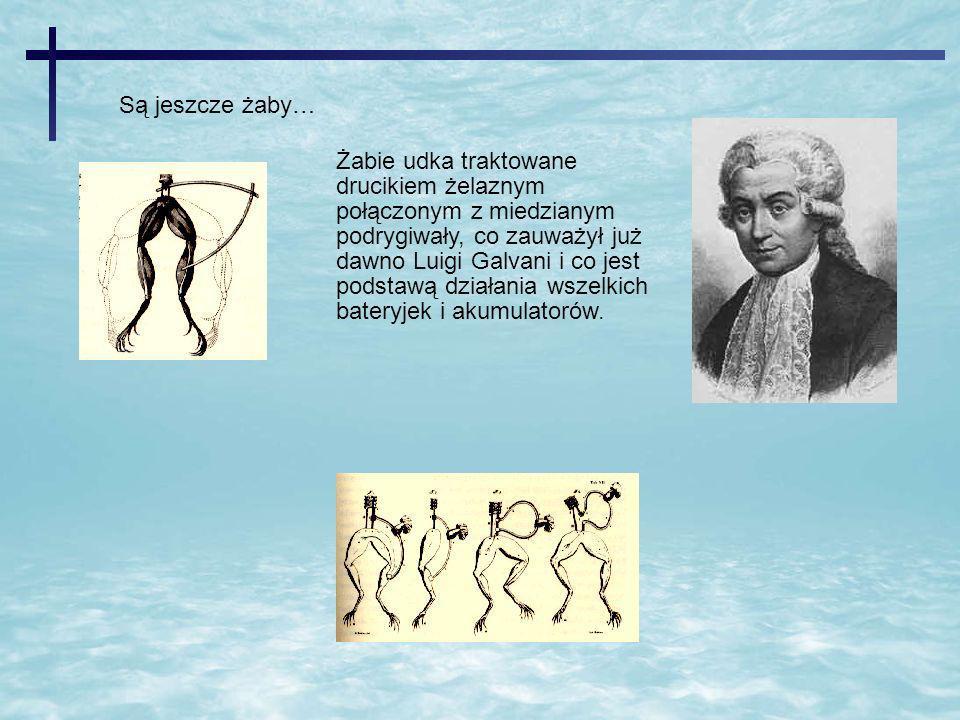 Są jeszcze żaby… Żabie udka traktowane drucikiem żelaznym połączonym z miedzianym podrygiwały, co zauważył już dawno Luigi Galvani i co jest podstawą