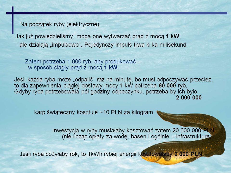 ale działają impulsowo.Pojedynczy impuls trwa kilka milisekund Zatem potrzeba 1 000 ryb, aby produkować w sposób ciągły prąd z mocą 1 kW. Jeśli każda