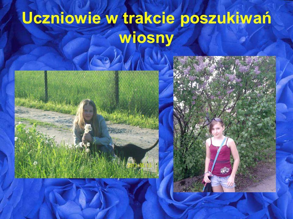 Mahonia Pospolita Pigwowiec Tawuła Wczesna