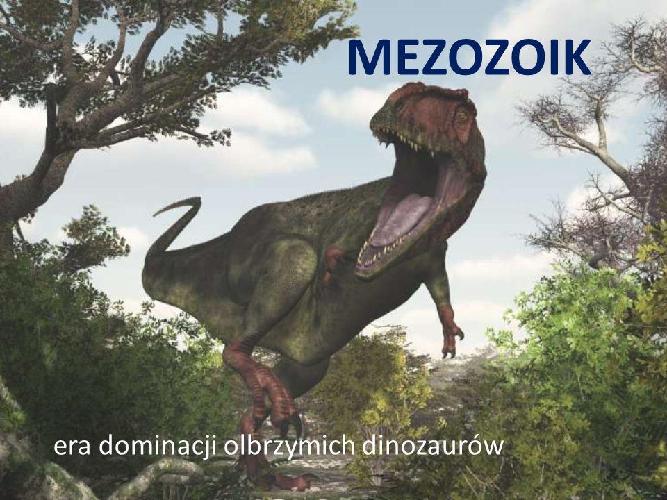 *W paleozoiku powstawały skały osadowe, zawierające dziś liczne skamieniałości zwierząt i roślin. W erze tej wystąpiły także silne ruchy górotwórcze,