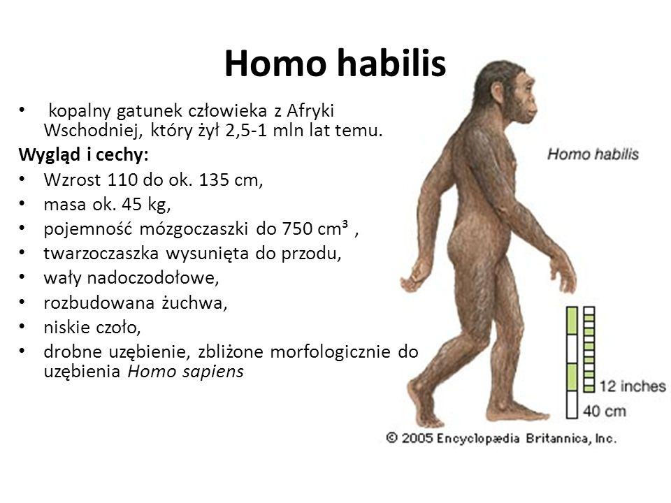 Żyły od ok. 4,2 do ok. 1 mln lat temu, początkowo w Afryce Wschodniej, na terytorium Wielkich Rowów Afrykańskich, później także w Afryce Południowej i