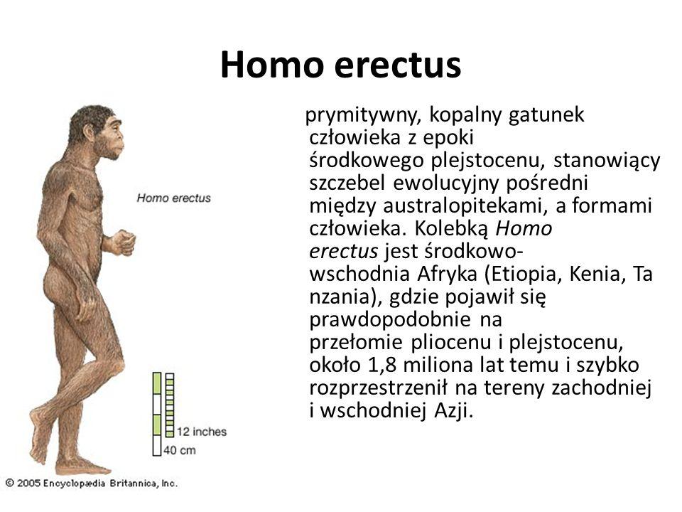 kopalny gatunek człowieka z Afryki Wschodniej, który żył 2,5-1 mln lat temu. Wygląd i cechy: Wzrost 110 do ok. 135 cm, masa ok. 45 kg, pojemność mózgo