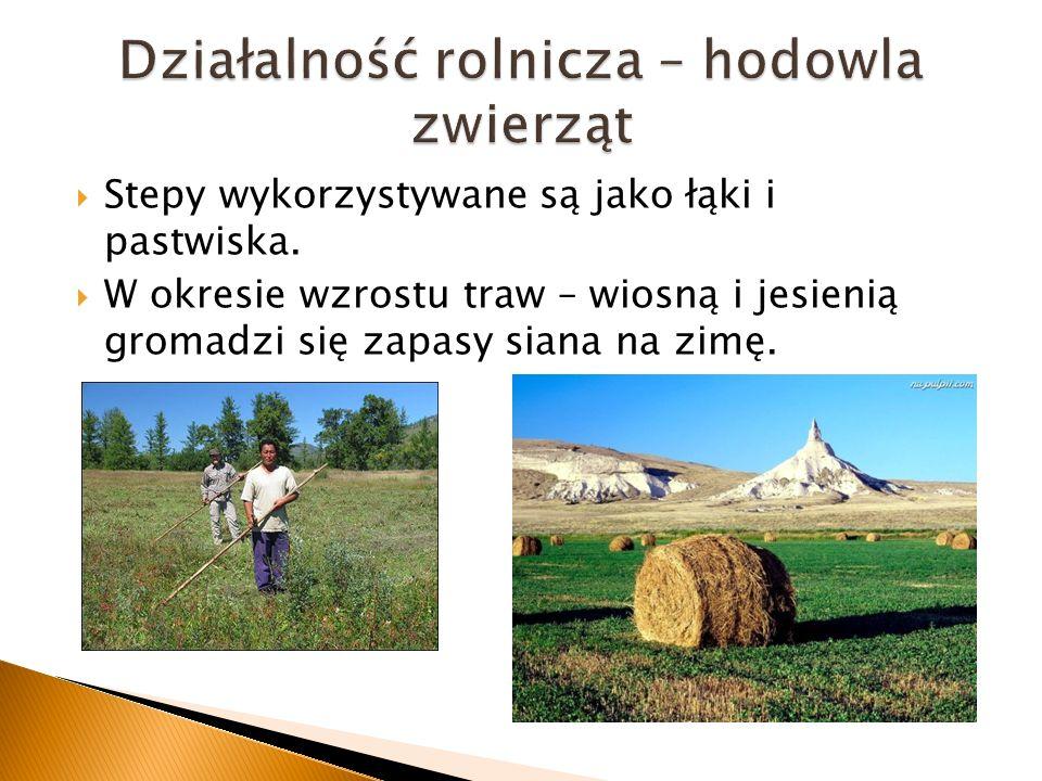 Stepy wykorzystywane są jako łąki i pastwiska. W okresie wzrostu traw – wiosną i jesienią gromadzi się zapasy siana na zimę.
