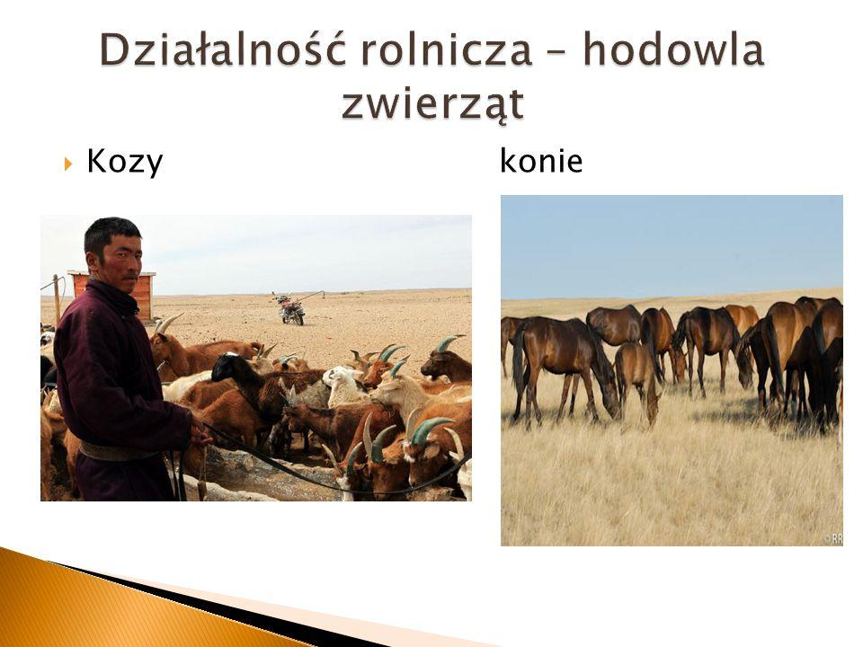 Kozy konie